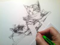 Kotě - kresba