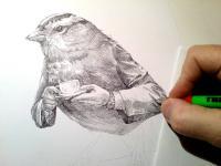 ptáček a kafíčko