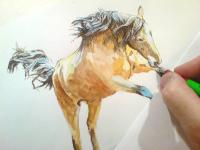 Kůň, běžící kůň, hříbě