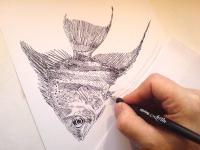 Skalár - perokresba, akvarijní ryba, pohled na kresbu