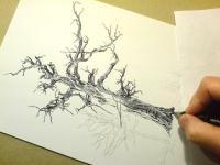 Myslibořický strom