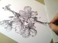 Kvetoucí třešně - perokresba
