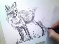 Liška - perokresba