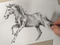 Kůň - perokresba