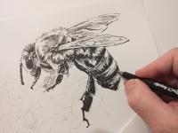 Včela - perokresba