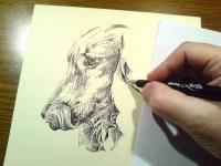 Jezevčík - kresba