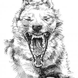 vlk, červená karkulka