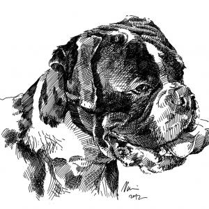 Boxer, boxík, pes