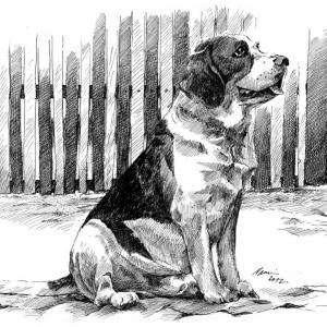 Beagle Ben