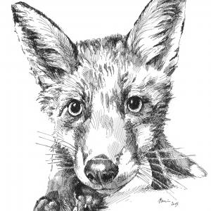Liška dává dobrou noc