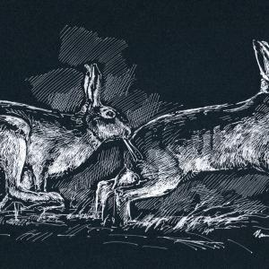 Zajíc polní - perokresba bílou tuží