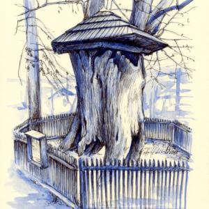 Jemnice - památná lípa