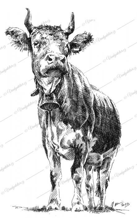 Kráva Jitka