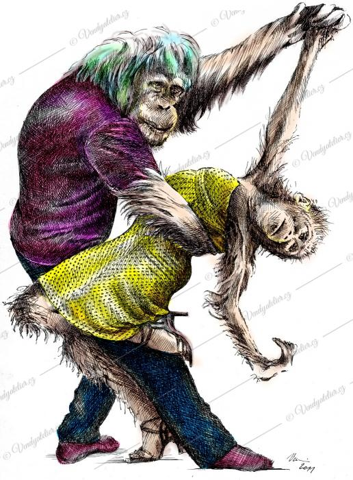 Taneční pár - opice