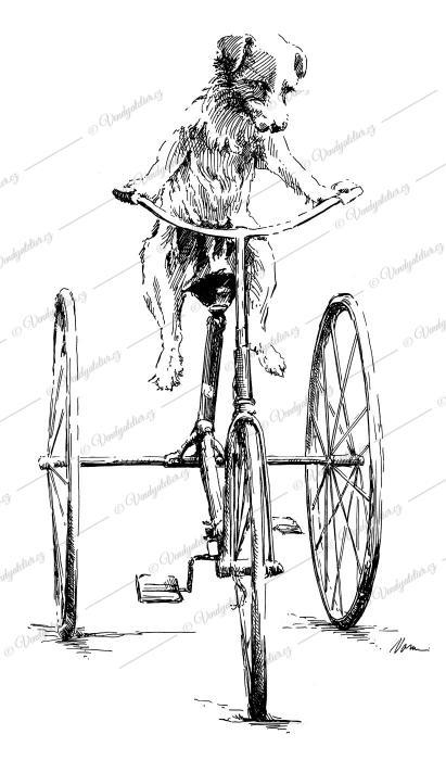Pes na kole