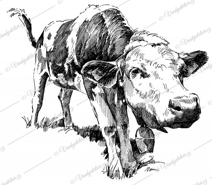 Tele - kráva