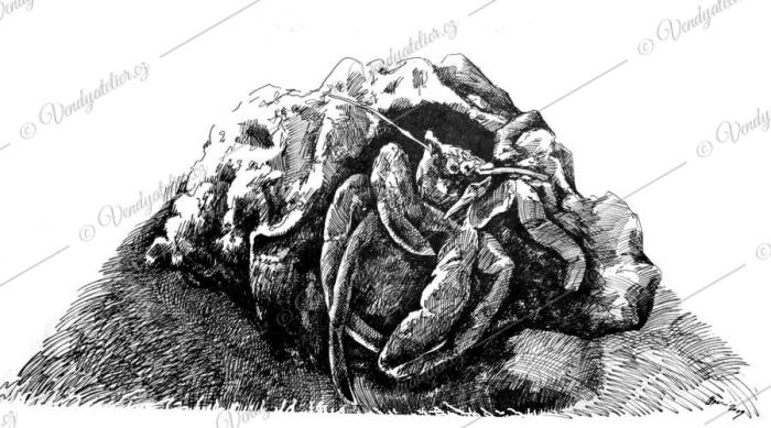 Zvířátka co plavou - krab