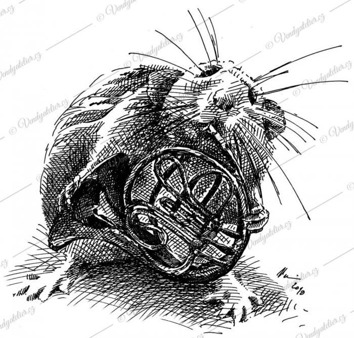 Myš - hudebnice