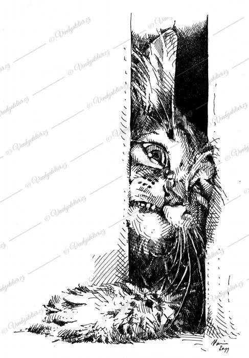 Perokresba zvědavého koťátka