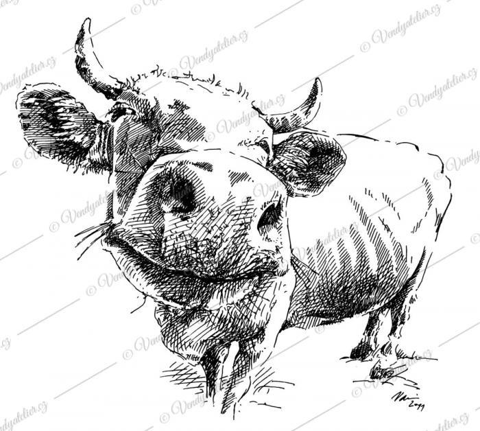 Perokresba krávy