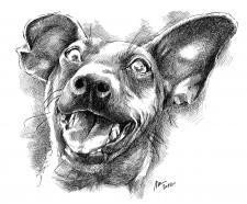 Pes lump