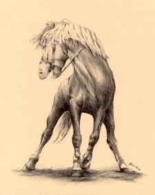 Koník