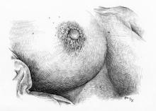 Prsa - perokresba