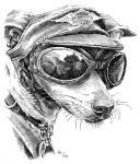 Pes motorkář, oblečený pes, pes harleyář